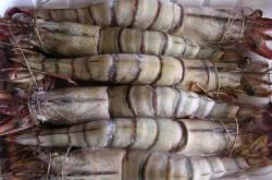 Camarão Tigre-1kg
