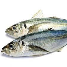 Peixe Carapau T25- 1kg