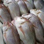 Peixe Pedra-1kg